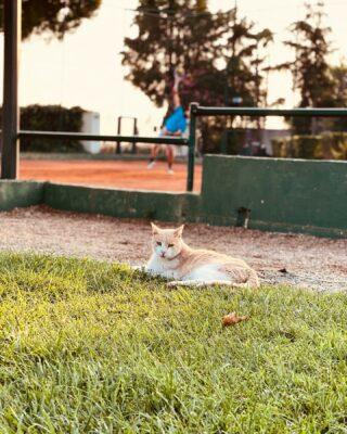 🐱 𝘛𝘢𝘬𝘦 𝘵𝘪𝘮𝘦 𝘵𝘰 𝘤𝘩𝘪𝘭𝘭 !  #chill #chilling #chillingcat #cat #tennisclub #tennisacademy #lesraquettes #lesraquettestennisacademy #catlife #garden #tennis #tenniscourt #tennislife #skg #greece #thessaloniki #thermi #chillout #taketimeforyourself #taketimeforyou #joinus