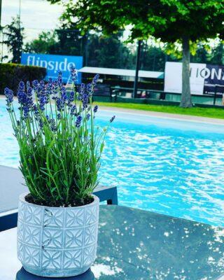 𝘔𝘢𝘺 𝘴𝘮𝘦𝘭𝘭𝘴 𝘭𝘪𝘬𝘦 𝘓𝘢𝘷𝘦𝘯𝘥𝘦𝘳 !🌱🌷 #spring #may #lavender #nearthepool #lesraquettes #tennisclub #tennisacademy #lesraquettestennisclub #lesraquettestennisacademy #skg #thessaloniki #greece #nature #green #garden #pool #tennis #smellslike